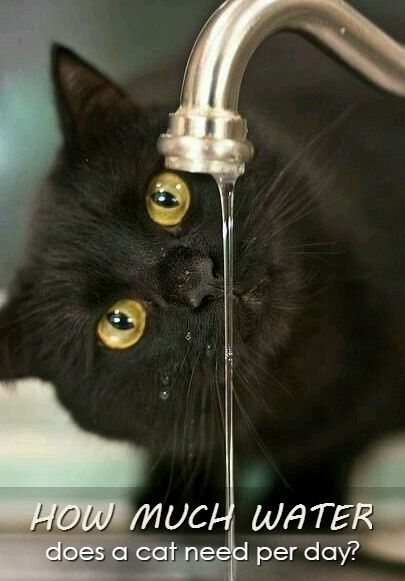 Is Your Cat Well Hydrated Make Sure Your Kitty Gets The Right Amount Of Liquid Cats Cat Drinking Black Cat Watch