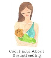 Cool Facts about Breastfeeding