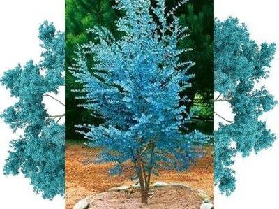 Drzewa I Krzewy Ozdobne Do Ogrodu Wieloletnie I Jednoroczne Lisciaste Kwitnace Szybkorosnace I Niskie Allegro Pl Landscape Design Glass Vase Painting