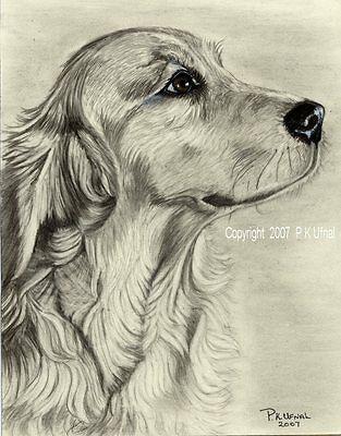Details About Pencil Dog Art Golden Retriever Print 2 By Pk Ufnal