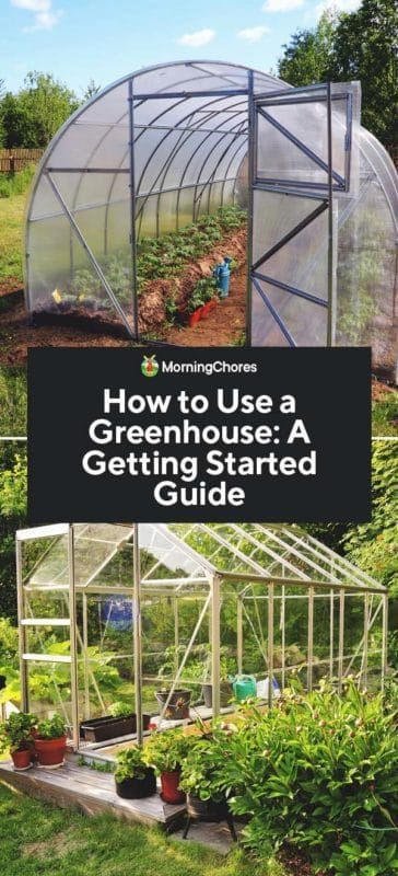How To Use A Greenhouse A Getting Started Guide In 2020 Diy Greenhouse Greenhouse Gardening Greenhouse Plants