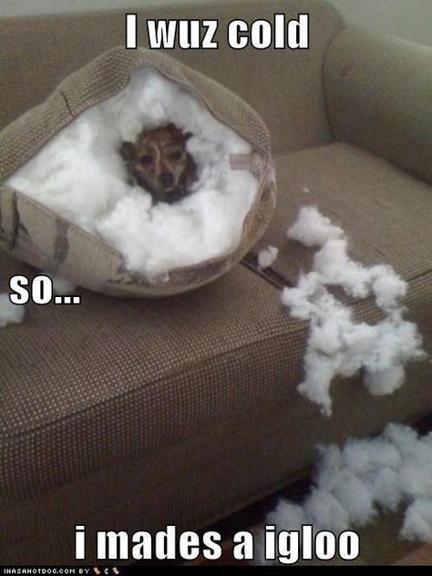Every dog owner has came home to this and thought what was he thinking lol now we know http://top10dogpictures.com/17-funny-dog-pictures-that-will-make-you-laugh.html