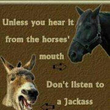 Jackass 2 horse