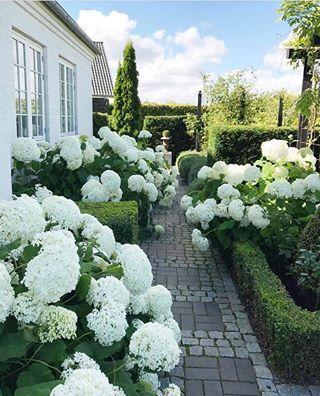 Decorating With White Hydrangeas My Favorite Flower Hydrangea Garden White Gardens Beautiful Gardens