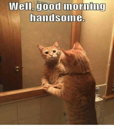 100 Funny Good Morning Memes Memes Of Good Morning Cat Memes Cute Cat Gif Funny Cat Memes