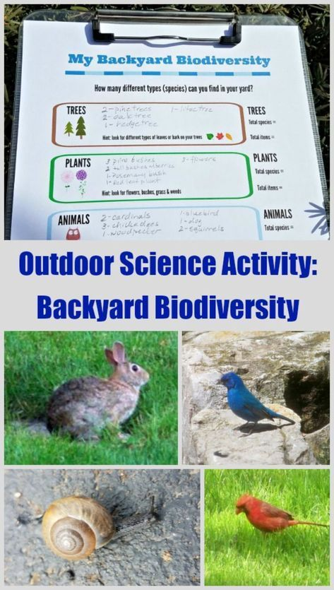 Ecology Science Activity: Biodiversity in Your Own Backyard - great environmental education activity for middle school and high school - fun nature study idea for elementary kids too! Inspires deeper science and nature study - can also be used with interactive science notebook