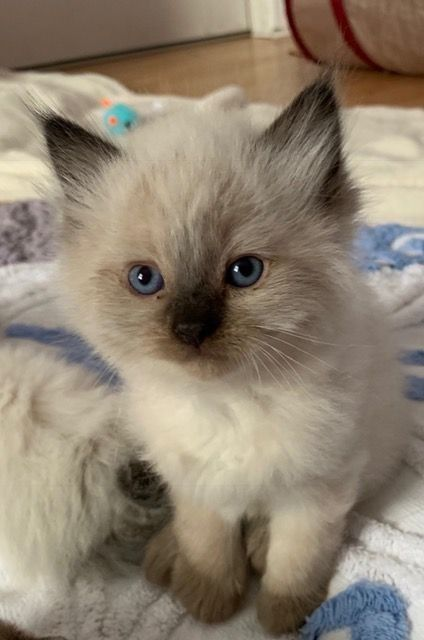 Pin By Ginna On Here Kitty Kitty I Love Cats In 2020 Baby Cats
