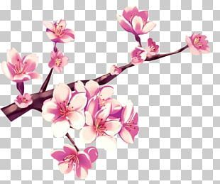 Cherry Blossom Png Images Cherry Blossom Clipart Free Download Cherry Blossom Clip Art Free Clip Art Cherry Blossom Petals