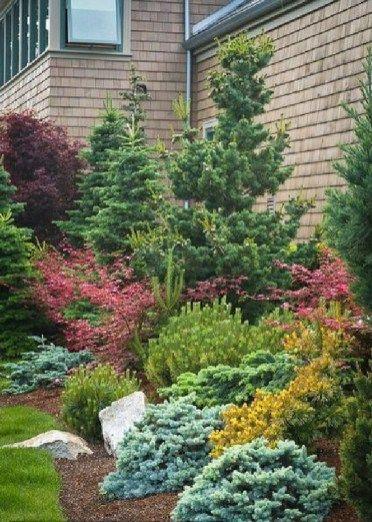 Best Ideas For Evergreen Landscaping Design 50 Pictures Evergreen Landscape Front Yard Backyard Landscaping Evergreen Landscape