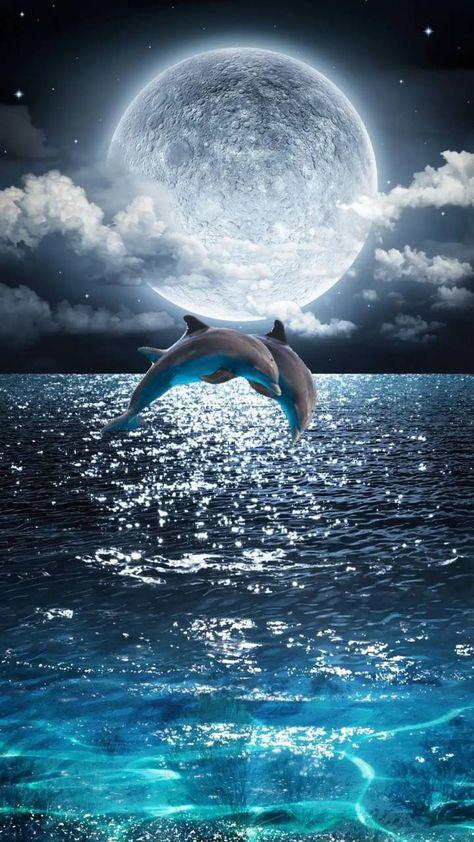 delfino alla luna piena
