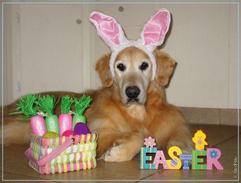 Forrest's 2012 Easter Photo    (Photo credit: Elizabeth Gaudreau)