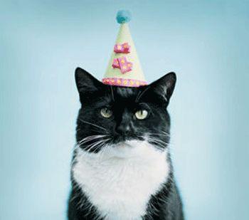 Resultado de imagem para cats in party hats