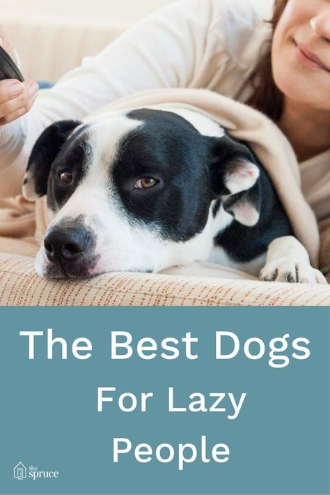 Low Maintenance Dogs For Busy Or Lazy People Best Dogs For Families Family Dogs Breeds Best Small Dogs
