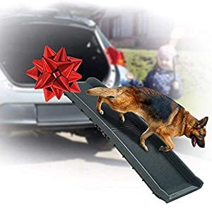dog in back of truck law