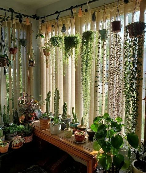 House Plants Decor, Patio Plants, Plants Indoor, Balcony Hanging Plants, Indoor Plant Decor, Indoor Plant Shelves, Bedroom Plants Decor, Cactus House Plants, Indoor Cactus