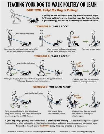 Dog Training Leashes For Large Dogs Petsmart Dog Training Prices Dog Training 7 Days Dog Trainin Dog Training Obedience Dog Training Dog Training Books
