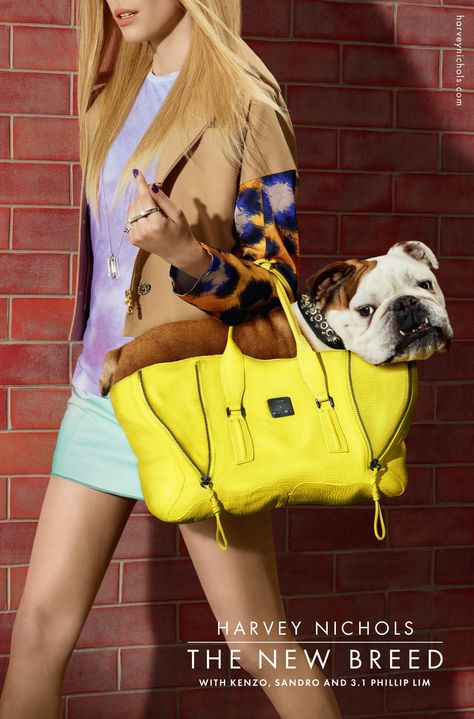 Spud the British Bulldog in the New Breed campaign for Harvey Nichols