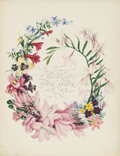 Specimens of the Flora of South Africa by A Lady