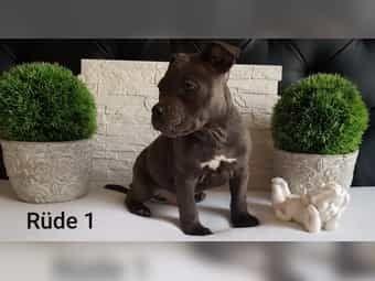 Sooooo Cute Haustiere Hunde Susse Tiere