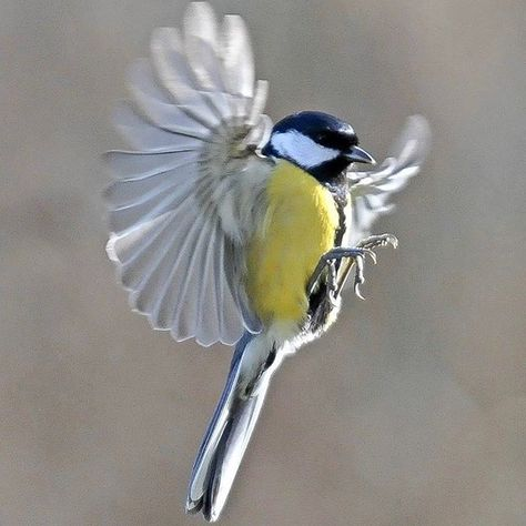 #bird#flyingbirds #wildlife #birdwatch #birdwatching #nikonphoto #nikon #nikonphotography #nofilter nofilter pins  #bird#flyingbirds #wildlife #birdwatch #birdwatching #nikonphoto #nikon #nikonphotography #nofilter #nophotoshop