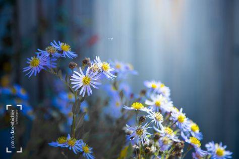 eos cool flowerscaptured on a walk...