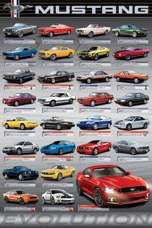 Ford Mustang 50 Years Of Evolution Prints Allposters Com In 2020 Ford Mustang Mustang Mustang Shelby