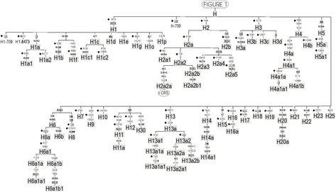 Pin by Nina King on Genetics | Phylogenetic tree, Genetics, Sheet music
