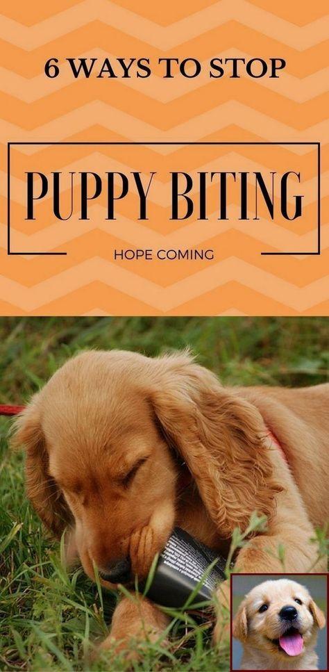 Best Dog Training Sites Dogtrainingtoronto Dogtraininghacks