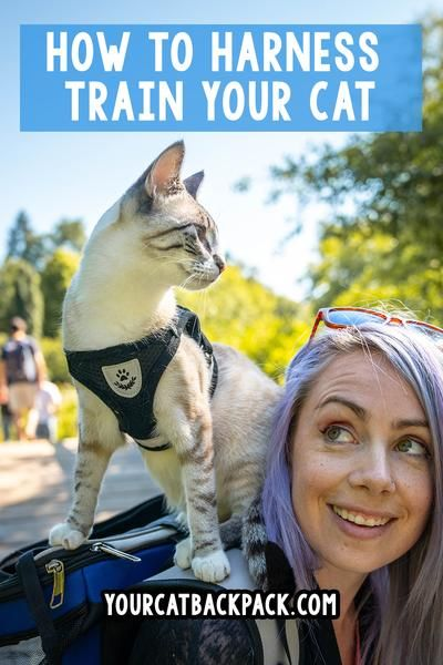 How To Harness Train Your Cat All The Tips Best Practices You