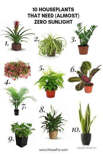 10 Houseplants That Need Almost Zero Sunlight House Fur Easy House Plants Best Indoor Plants House Plants Indoor