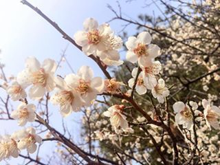 A Three Day Itinerary For Fukuoka Japan Spring Blossom Flower Power Visit Seoul