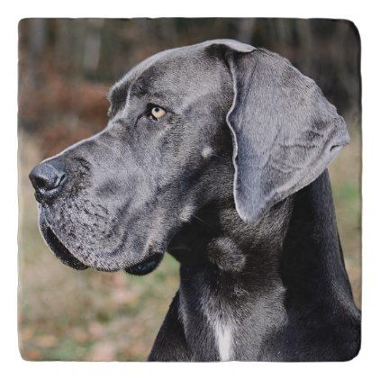 Great Dane Portrait Trivet Animal Gift Ideas Animals And Pets