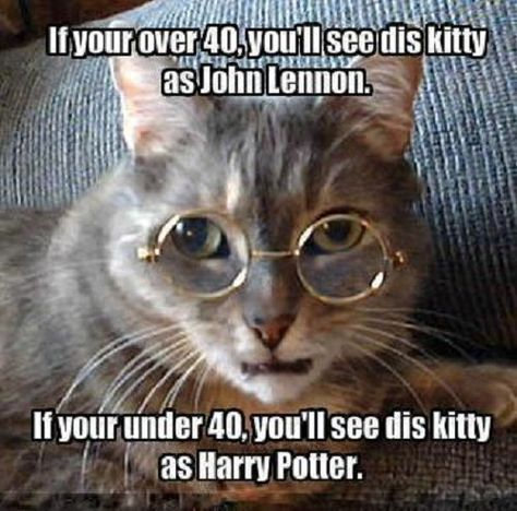 Dis kitty be Harry Lennon Potter!