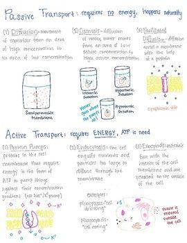 Cell Transport Cell Transport Cell Membrane Transport Active Transport Biology