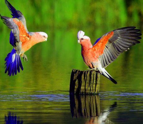 Beautiful Dp Pics Beautiful Bird Wallpaper Animals Birds Wallpaper Hd