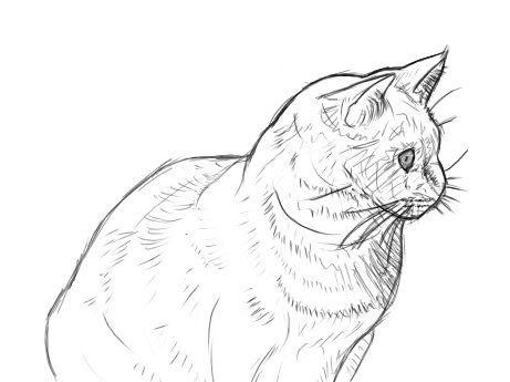Eine Katze Malen Und Zeichnen Katze Malen Katze Zeichnen