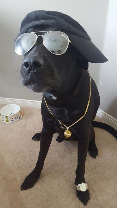 Pitbull Puppies Dog Pound Miami Dog Pound Orlando Lol Dog