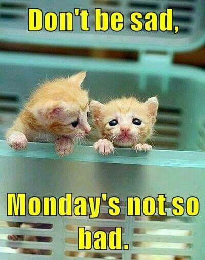Don't be sad, Monday's not so bad. #Mondaymemes #Funnymondaymemes #Mondaymemesforwork #Mondayworkmemes #Mondaymorningmemes #Funnymondayimages #Funnymondayquotes #Happymondaymemes #Mondaymemescute #Mondaymemespositive #Mondaymemesanimals #Mondaycatmemes #Mondayanimalmemes #Cutemondaymemes #Mondayevememes #Memes #Funnymemes #Memes2021 #Mondaysmeme #Bestmondaymemes #Funnyquotes #Sarcasticquotes #Hilariousquotes #Humorousquotes #Laughablequotes #Wittyquotes #therandomvibez