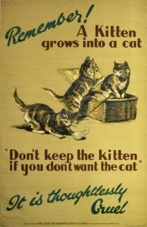 7 Vintage Posters That Prove Kindness To Animals Isn T A New Idea Kindness To Animals Vintage Posters Kittens