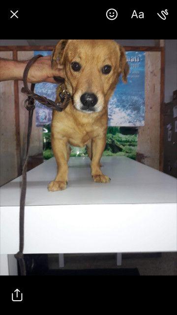 Super Nice Nacho Is An Adoptable Dog Labrador Retriever