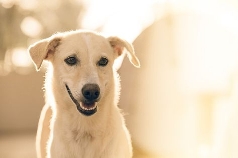 Canine Care in Millersburg, OH