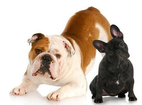 Pin Von Stefanie Beaver Auf English Bulldogs Bulldogge