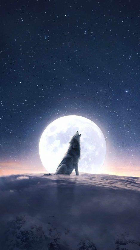 Iphone Wallpaper Moon Hintergrundbildiphone Tapete Moon Wolf Howl Iphone Wallpaper Iphone Wallpapers Fa Iphone Wallpaper Wolf Wolf Wallpaper Wolf Howling