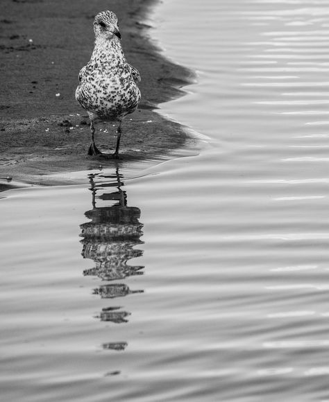 a bird shot at bear lake Idaho