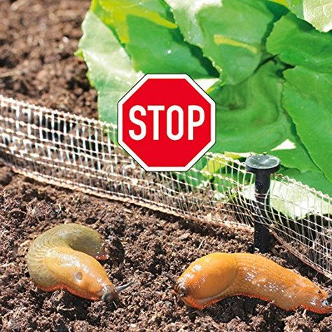 Tipps Gegen Schnecken Im Garten Schnecken Im Garten Schadlinge Im Garten Und Nacktschnecken