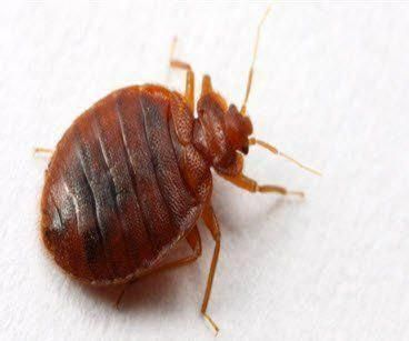 Residential To Commercial Pest Control Services Fumigation And Anti Termite Services In Dubai Contact Us To Get Rid Termite Control Termites Termite Treatment