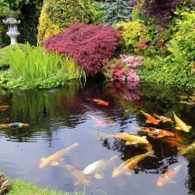 Preparing Your Pond For Winter Pond Landscaping Japanese Water Gardens Backyard Water Feature
