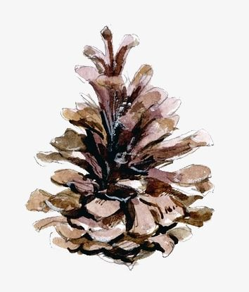 Pinecone Rospisyu Akvarel Akvarel Kak Risovat Risovat