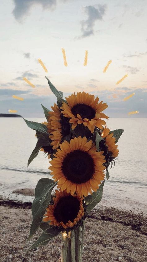Super Photography Nature Flowers Lights 44 Ideas Sunflower