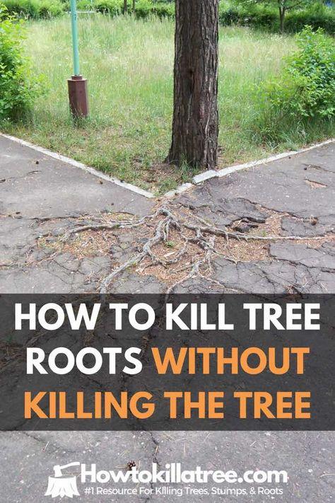 Killing Tree Stumps Copper Nails : killing, stumps, copper, nails